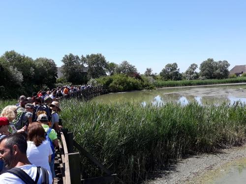 """I viaggiatori del treno storico """"tra laguna e mare"""" durante la visita alla Riserva Naturale Valle Canal Novo  - Marano Lagunare, 15 luglio 2019."""